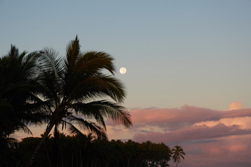 Palm trees at sunset with beautiful clouds and view of the moon.