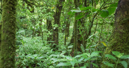 Defocused shot of dense rainforest with moss covered trees in Costa Rica