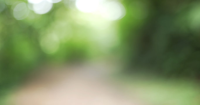 Blurred background plate of hiking trail through lush green vegetation