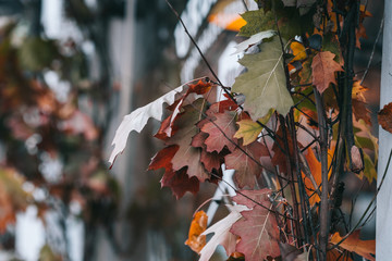 Fall leaves outdoor decor ideas