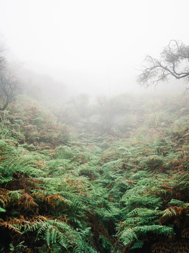 Misty tropical forest in smoke