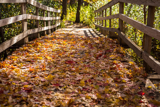 Pedestrian Bridge in the Midwest Covered in Fallen Autumn Leaves