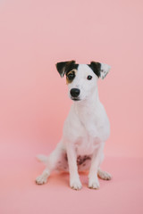 Young white and black dog
