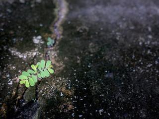 Weeds Growing in Crack