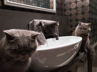 Two Grey Cats