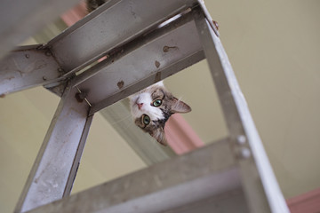 Renovating at home with pets - cat up the ladder