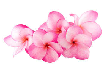Isolated plumeria flower on the white background.