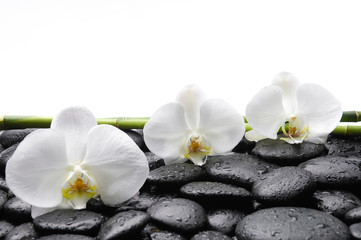 spa concept –three orchid and bamboo grove , wet stones