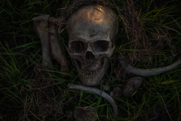 still life, human skulls and bones digged on dry grass in the field which has dim light, Art and background.