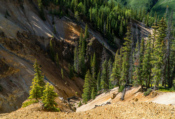 Southwest Colorado Forest