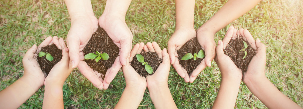 Multicultural hands of adult and children holding young plant over green grass background. Earth day environment friendly harmony together spring concept banner.