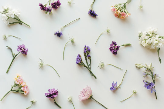 Various flowers on white
