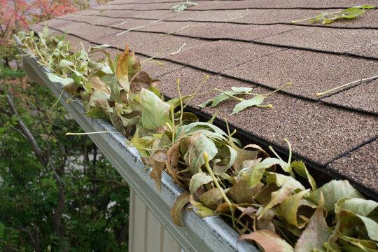 leaf filled gutter