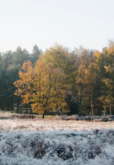 Autumnal trees beside frost covered ground at sunrise. Norfolk,