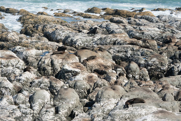 Ohau Point New Zealand Fur Seal Colony 29