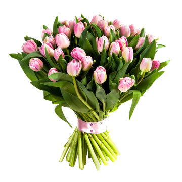 Fresh, lush bouquet of pink tulips isolated on white