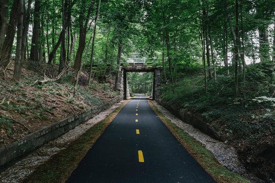 Bike Path Through Dark Woods