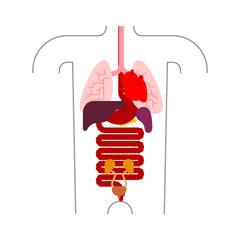 Human anatomy organs Internal. Systems of man body and organs. medical systems. vector illustration