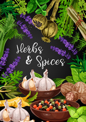 Herbs, spices and food seasonings, vector