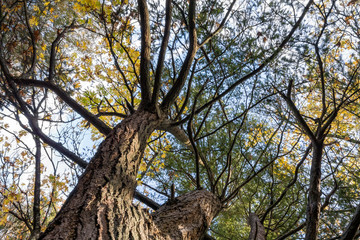 bottom view of tall trees with branches stretched out