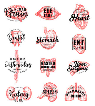 Human organs and bones sketch and lettering