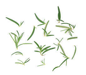 fresh rosemary isolated on white background,top view