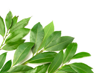 An overhead photo of bay branches in the corner. Green laurel twigs for eco cookery business. Bay branch isolated on white. Place for text, copyspace. Kitchen spices.