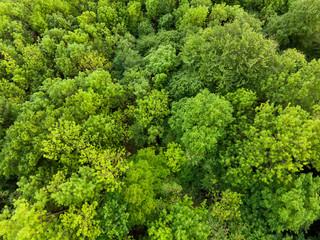WAld von Oben - Luftaufnahme