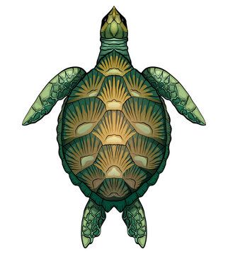 Color cartoon illustration of green turtle. The object is separate from the background. Illustration for printing on T-shirts, covers, sketches of tattoos and your design.