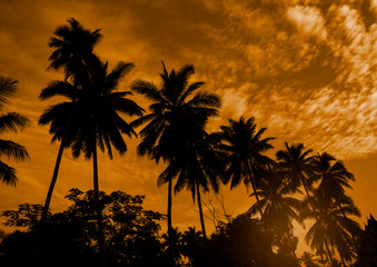 Black silhouette of coconut tree on sunrise background.