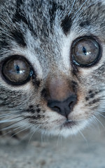 Closeup of small adorable kitten looking into the camera