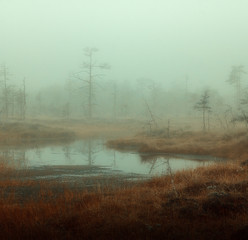 autumn misty swamp