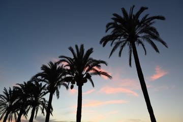 palmen silhouttte bei sonnenuntergang