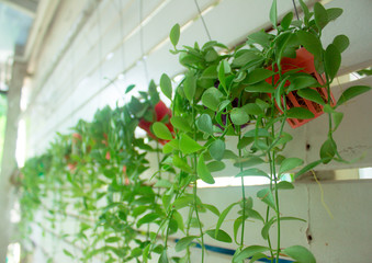 Hanging basket plants on the wall
