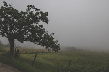 Foggy rural landscape in autumn
