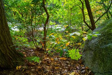 Autumn Forest Scene Foliage And Brush