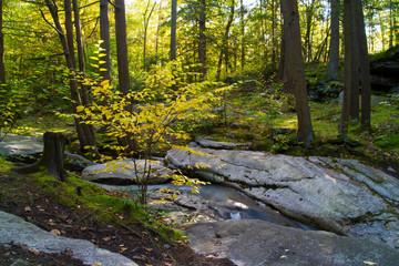 Autumn Woodland Scene Pennsylvania Deciduous Forest