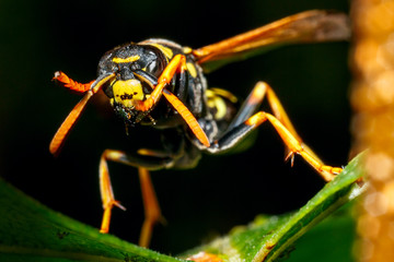 Wasp in nature.