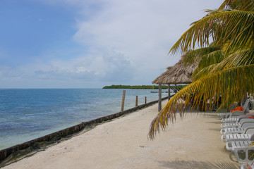 Belize, Beach, Mangroves, Palms
