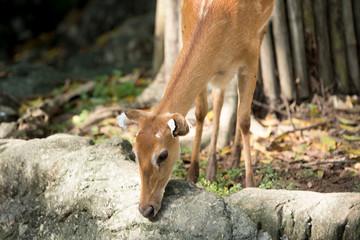 Deer as natural background or wallpaper.