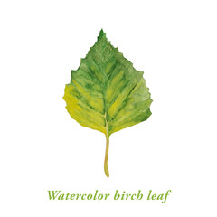 Watercolor green birch leaf