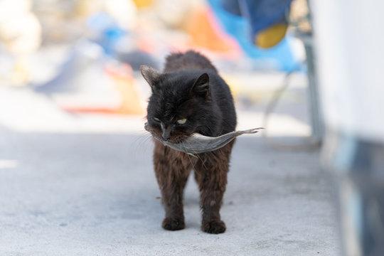 田代島の猫 Tashirojima,Japan Cats Paradise,Cats Island