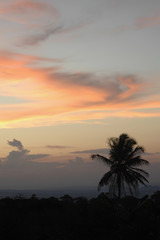 Silhouette of Palm Tree in Ghana, West Africa