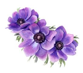 Beautiful violet anemones . Hand drawn watercolor