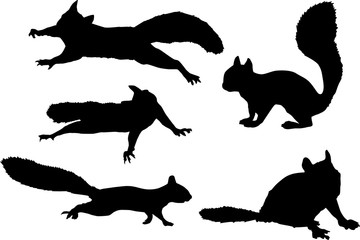 five black squirrels on white