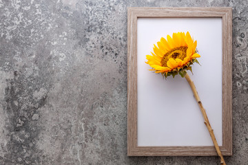 A concrete gray stone background with a wooden frame with a sunflower