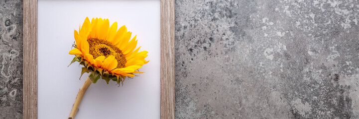 Panoramic photo of a concrete gray stone background with a wooden frame with a sunflower