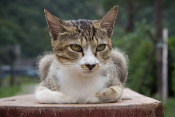 Cat resting on a bench in Houtong Cat Village, Taipei, Taiwan