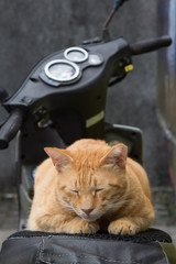 Cat sleeping on a motorcycle in Houtong Cat Village, Taipei, Taiwan