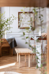 Blurred close-up of a plant with a wooden bench in the background in a rustical daily room interior. Real photo